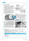 Die Symbiose zwischen Blattschneiderameise und Pilz. Mit didaktischen Erläuterungen. Preview 5
