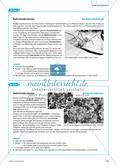 Die Symbiose zwischen Blattschneiderameise und Pilz. Mit didaktischen Erläuterungen. Preview 6