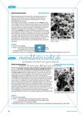 Die Symbiose zwischen Blattschneiderameise und Pilz. Mit didaktischen Erläuterungen. Preview 7