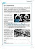 Arzneimittel: Eigenschaften und Heilwirkungen des Ginkgo biloba. Mit didaktischen Erläuterungen. Preview 3