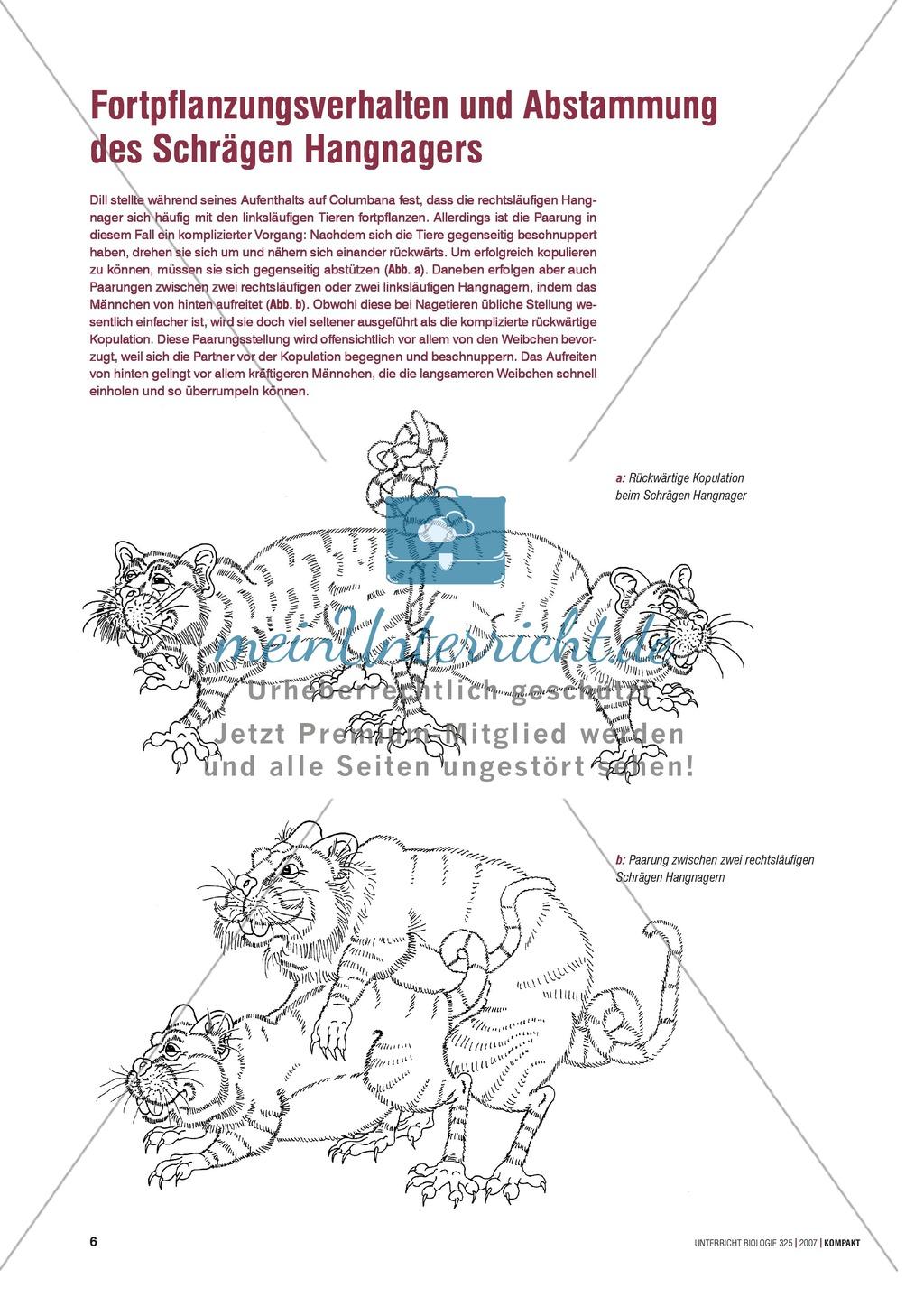 Nice Abstammungen Arbeitsblatt Ideas - Kindergarten Arbeitsblatt ...