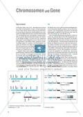 Basisartikel: Chromosomen und Gene Preview 1