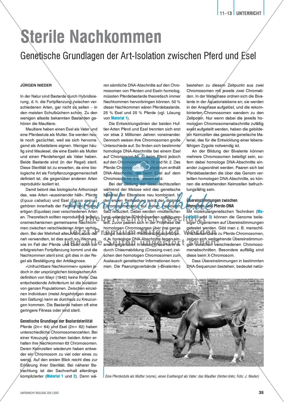 Sterile Nachkommen: Genetische Grundlagen der Art-Isolation zwischen Pferd und Esel. Preview 0