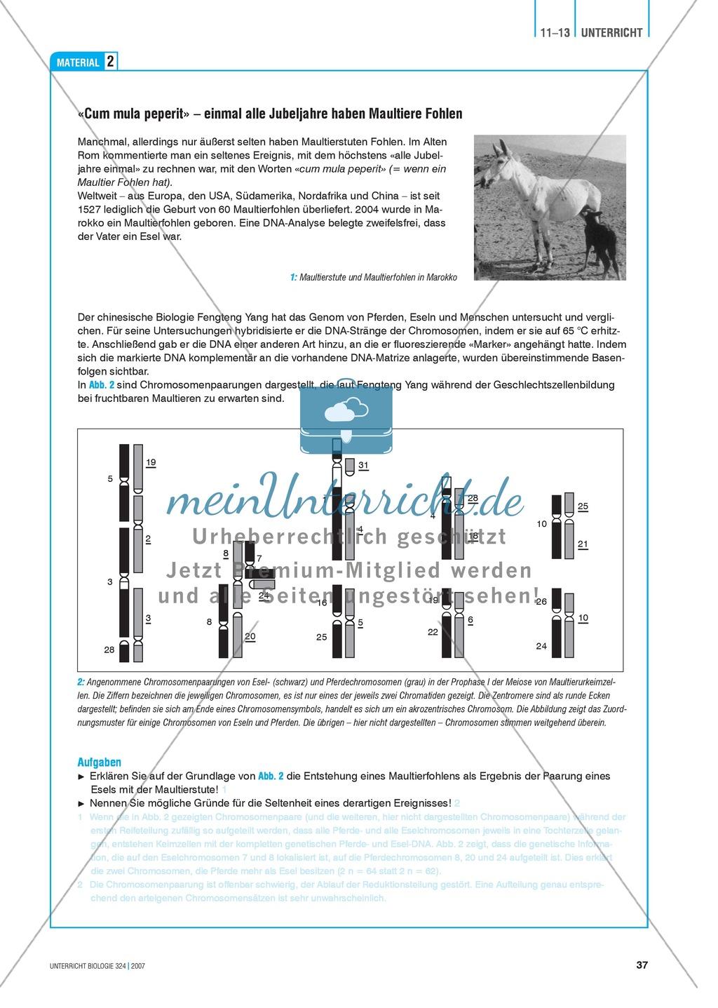 Sterile Nachkommen: Genetische Grundlagen der Art-Isolation zwischen Pferd und Esel. Preview 2