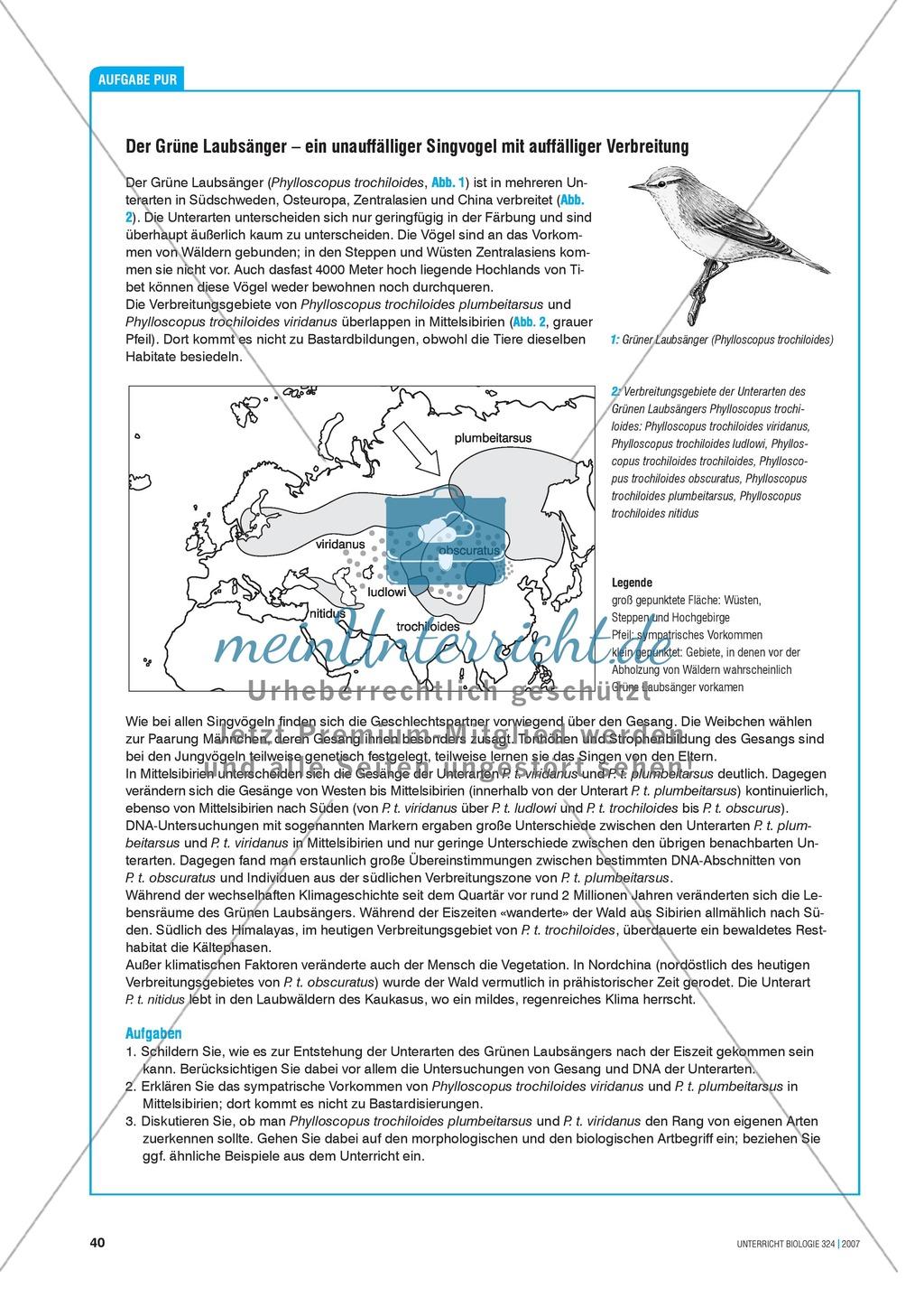 Der grüne Laubsänger - ein unauffälliger Singvogel mit auffälliger Verbreitung Preview 1