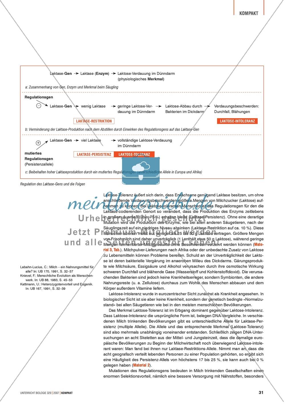 Alltagsvorstellungen zur Genetik: Genfunktion, Genregulation und Mutation: Info-Text und Aufgaben Preview 2