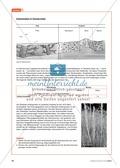 Alltagsvorstellungen zur Ökologie - Mensch und Natur: Info-Text und Aufgaben Preview 4