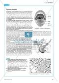 Gesundheit: Dentale Fitness - das Ökosystem Mundhöhle - Info-Text und Aufgaben Preview 3