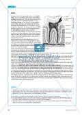 Gesundheit: Dentale Fitness - das Ökosystem Mundhöhle - Info-Text und Aufgaben Preview 6