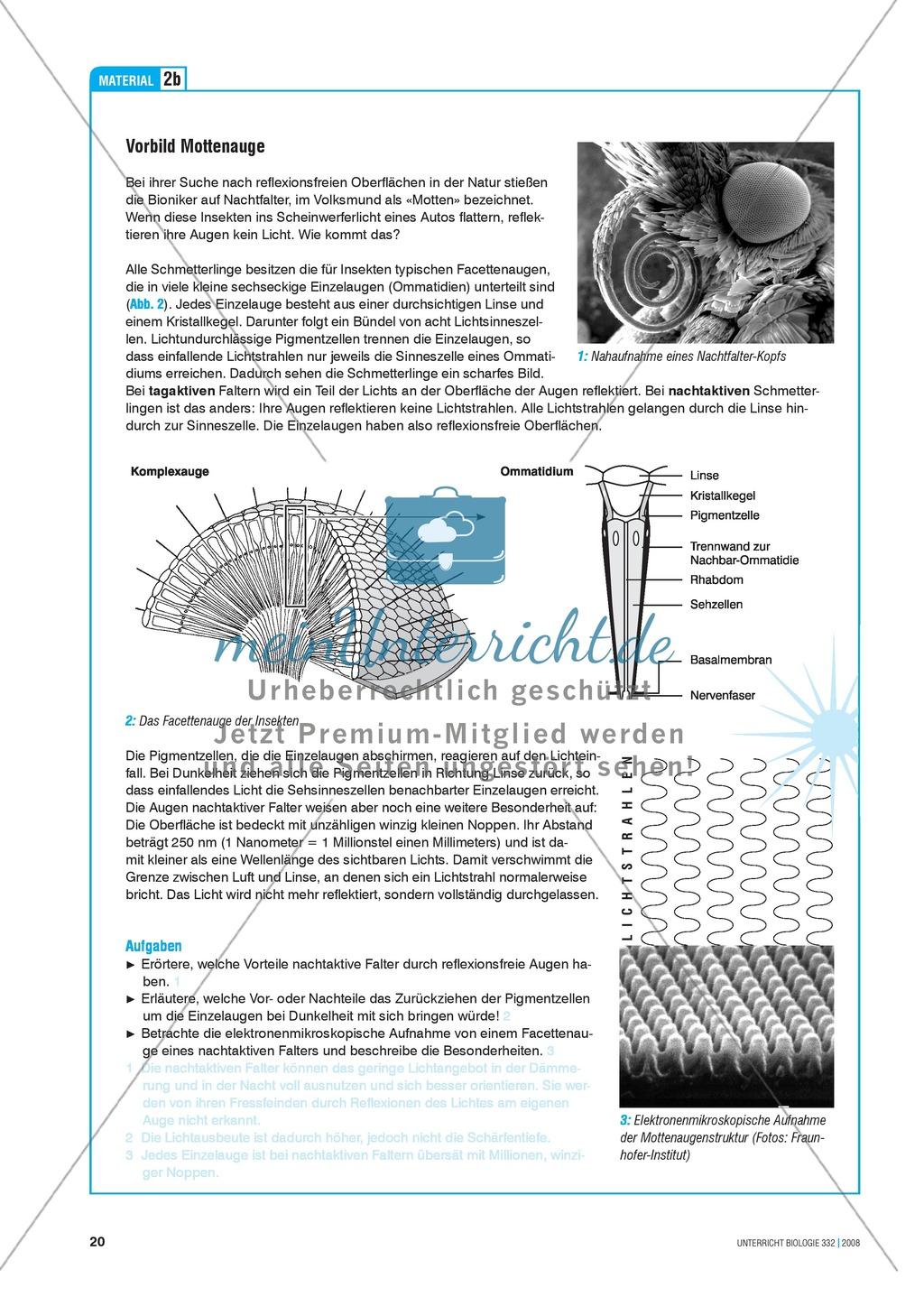 Bionik: Entspiegelung nach dem Prinzip der Motte - Info-Text und Aufgaben Preview 3