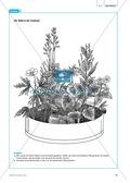 Der Wald in der Schüssel - Wachstum von Bäumen und die Stockwerke des Waldes - Info-Text und Aufgaben Preview 2