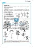 Der Wald in der Schüssel - Wachstum von Bäumen und die Stockwerke des Waldes - Info-Text und Aufgaben Preview 4