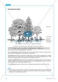 Der Wald in der Schüssel - Wachstum von Bäumen und die Stockwerke des Waldes - Info-Text und Aufgaben Preview 5