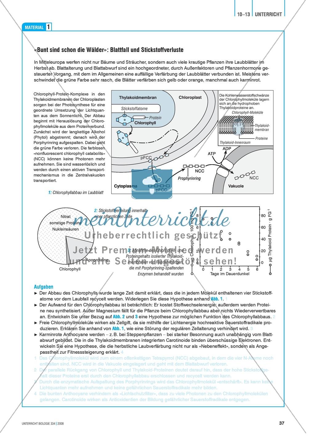 Der Stickstoff im Ökosystem Wald - Info-Text und Aufgaben Preview 1