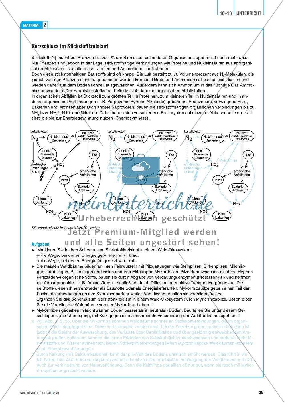 Der Stickstoff im Ökosystem Wald - Info-Text und Aufgaben Preview 3