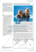 Tier und Mensch: Räuberische Übergriffe - Populationsregulation der Seeotter vor den Aleuten Preview 4