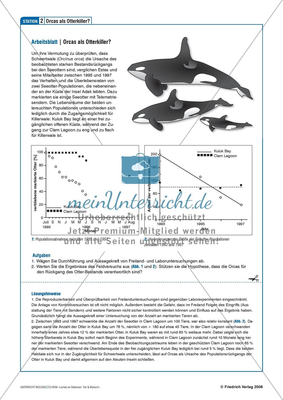 Tier und Mensch: Räuberische Übergriffe - Populationsregulation der Seeotter vor den Aleuten Preview 5