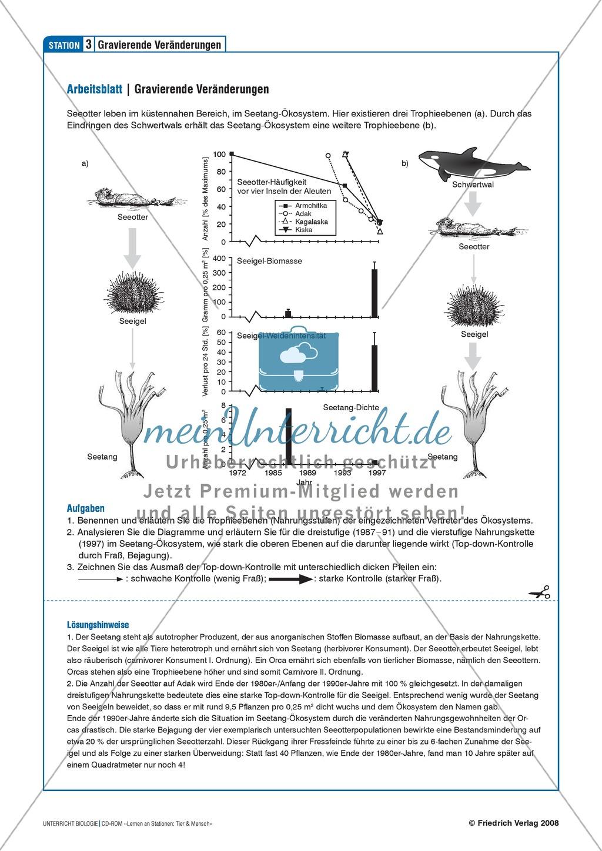 Tier und Mensch: Räuberische Übergriffe - Populationsregulation der Seeotter vor den Aleuten Preview 6