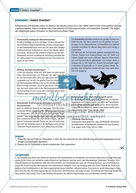 Tier und Mensch: Räuberische Übergriffe - Populationsregulation der Seeotter vor den Aleuten Preview 8