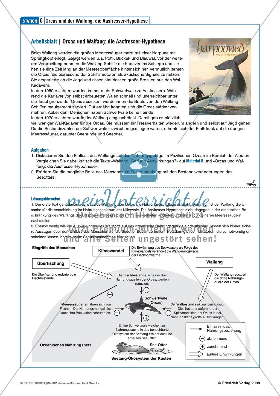 Old Fashioned Wal Evolution Arbeitsblatt Image - Kindergarten ...