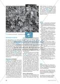 Neobiota: Die Anpassungs- und Verteidigungsmechanismen der Herkulesstaude erarbeiten und verstehen Preview 2