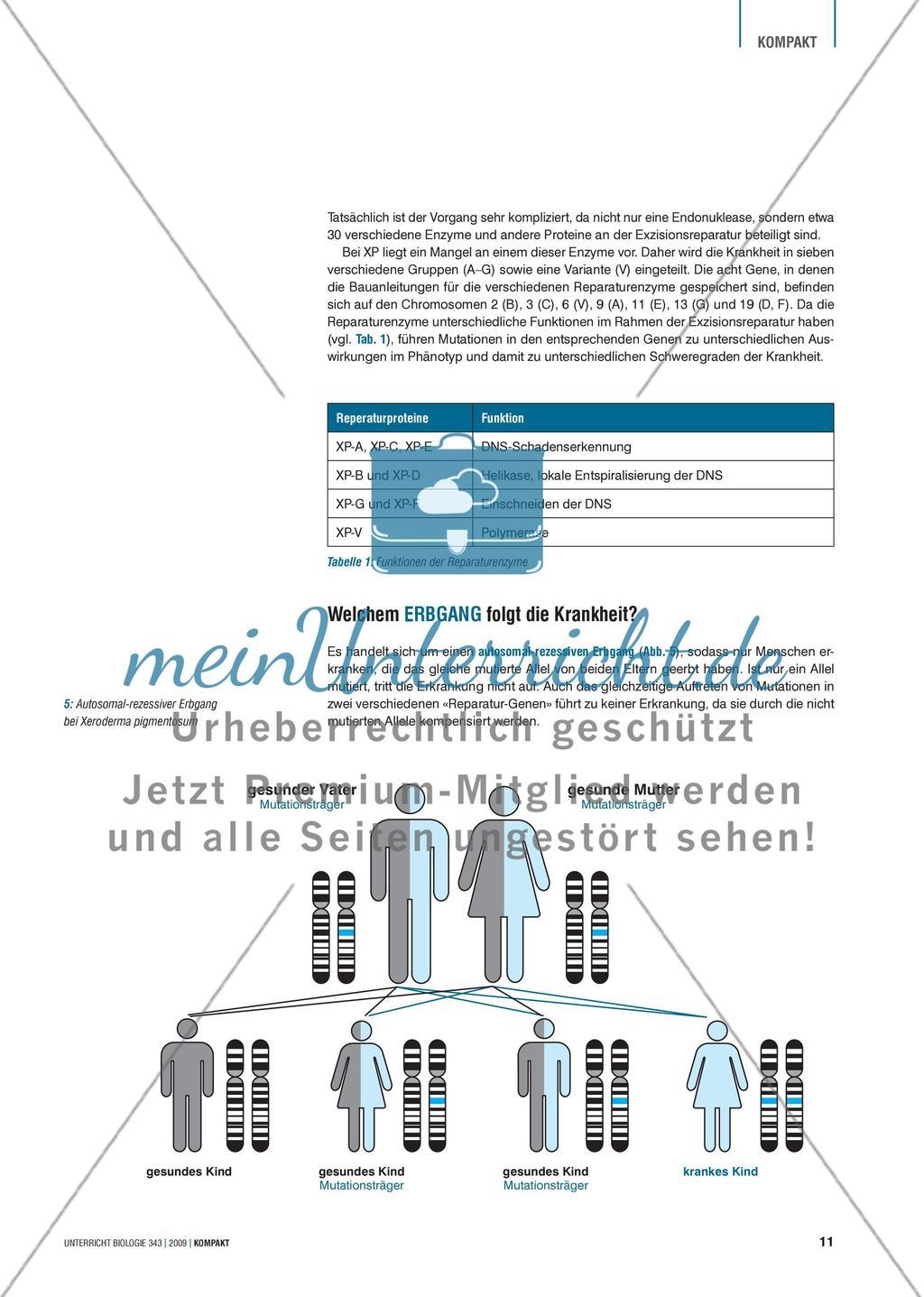 """Genetik: Untersuchung der erblich bedingten Krankheit Xeroderma pigmentosum (""""Mondscheinkinder"""") Preview 3"""