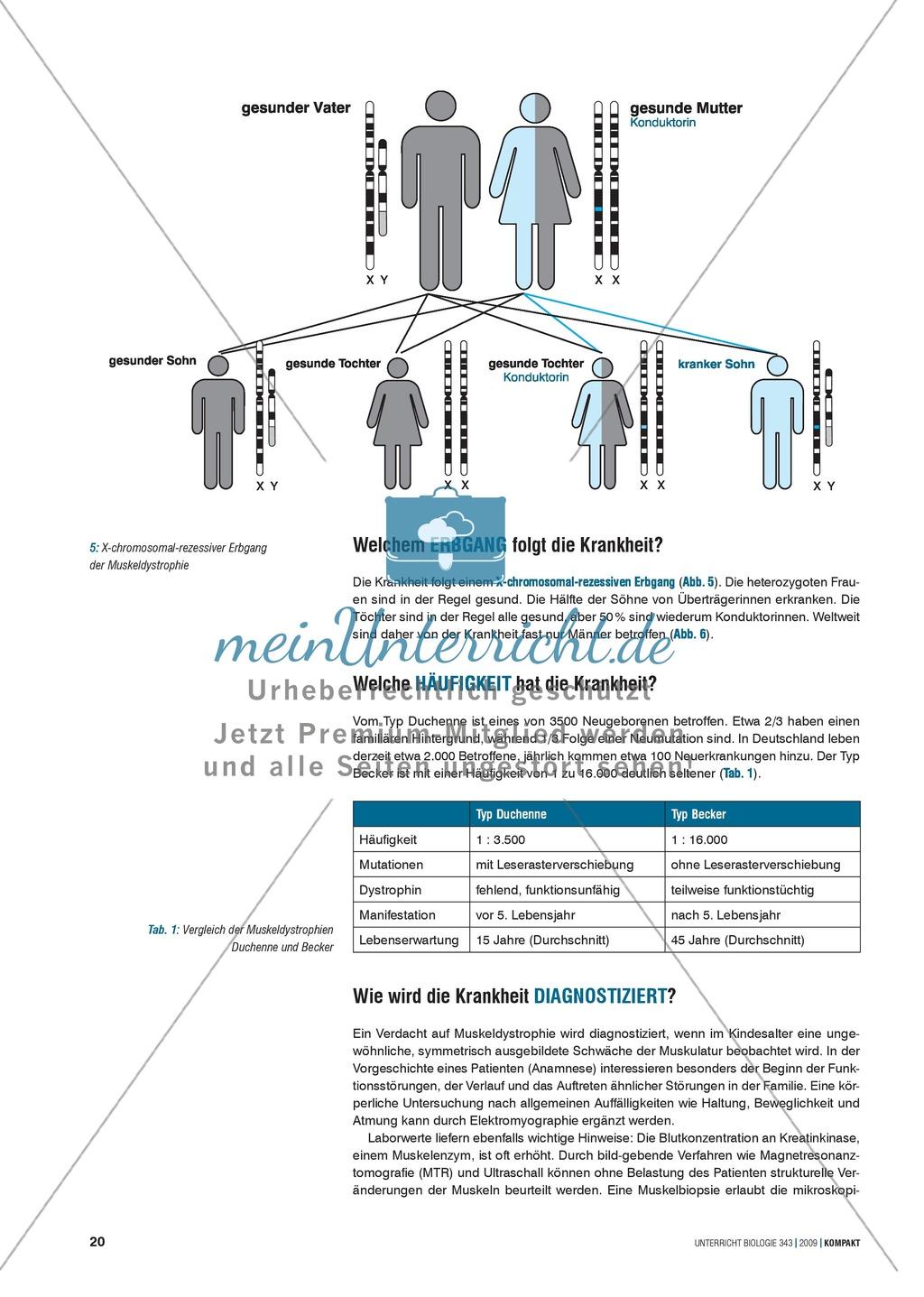 Genetik: Untersuchung erblich bedingter Erkrankungen der Muskulatur ...
