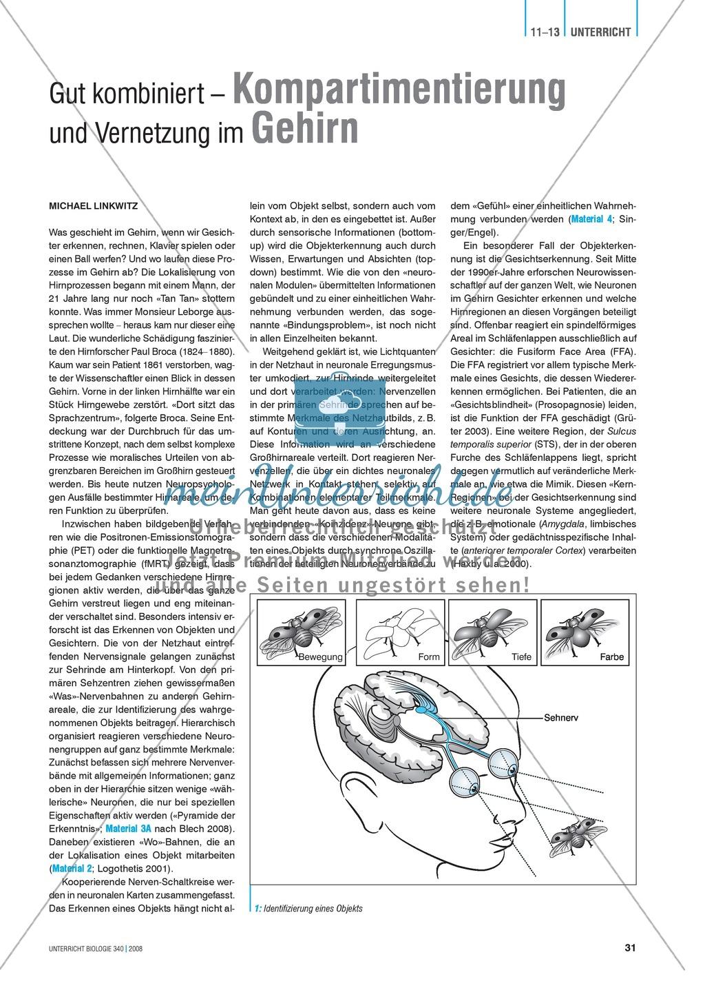 Kompartimentierung: Vernetzung im Gehirn - Gesichtserkennung durch ...