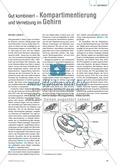 Kompartimentierung: Vernetzung im Gehirn - Gesichtserkennung durch Neuronen Preview 1