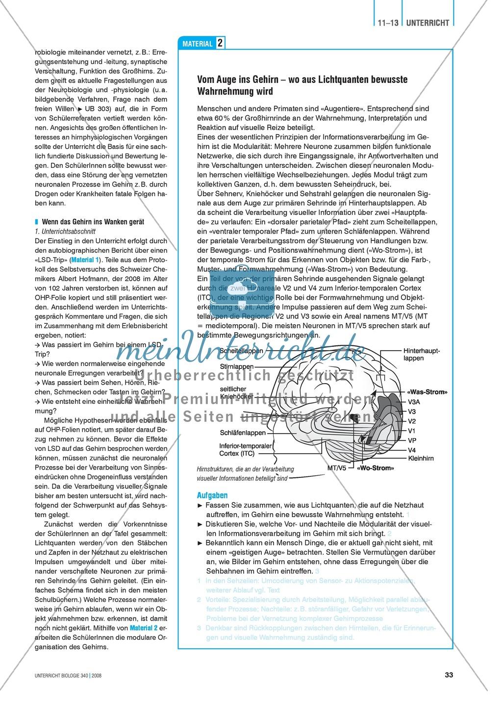 Kompartimentierung: Vernetzung im Gehirn - Gesichtserkennung durch Neuronen Preview 2
