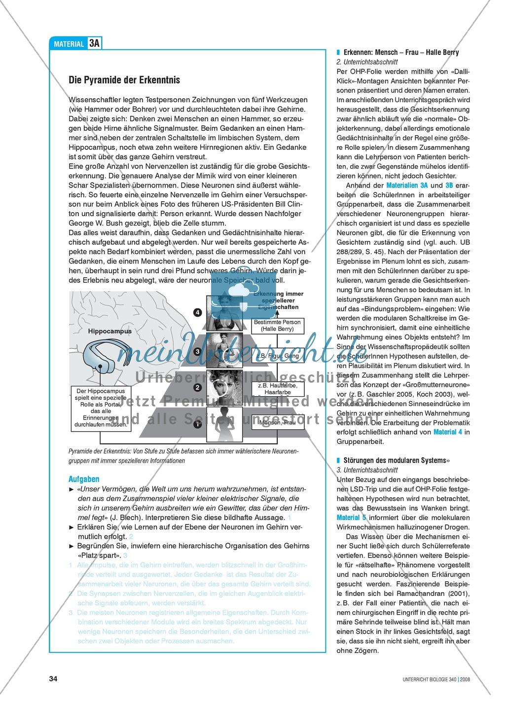 Kompartimentierung: Vernetzung im Gehirn - Gesichtserkennung durch Neuronen Preview 3