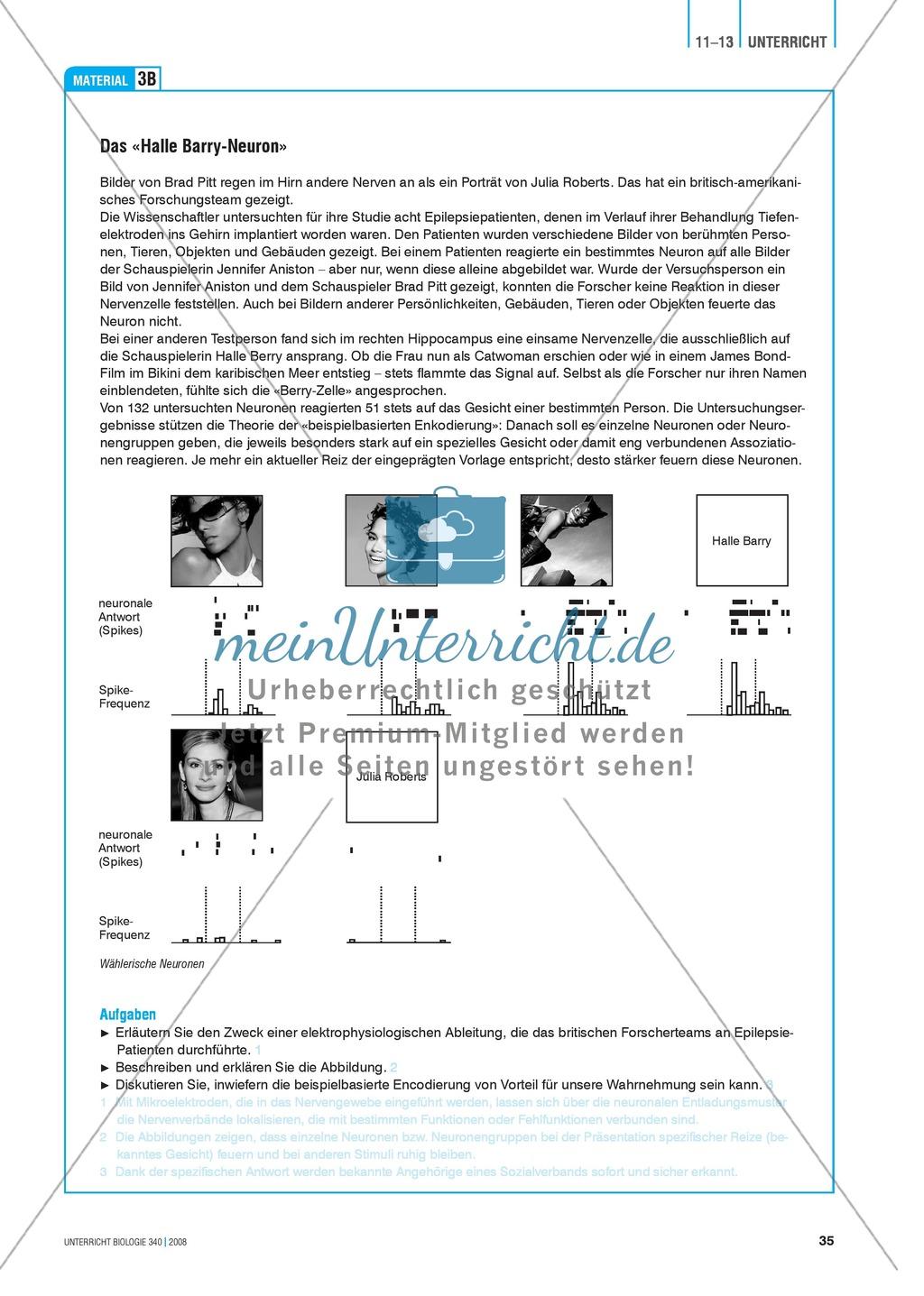 Kompartimentierung: Vernetzung im Gehirn - Gesichtserkennung durch Neuronen Preview 4