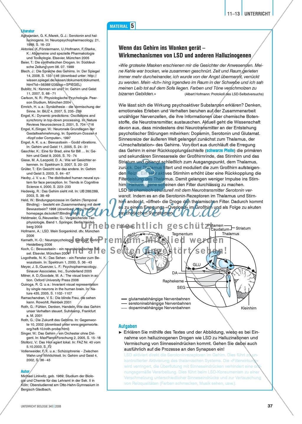 Kompartimentierung: Vernetzung im Gehirn - Gesichtserkennung durch Neuronen Preview 6