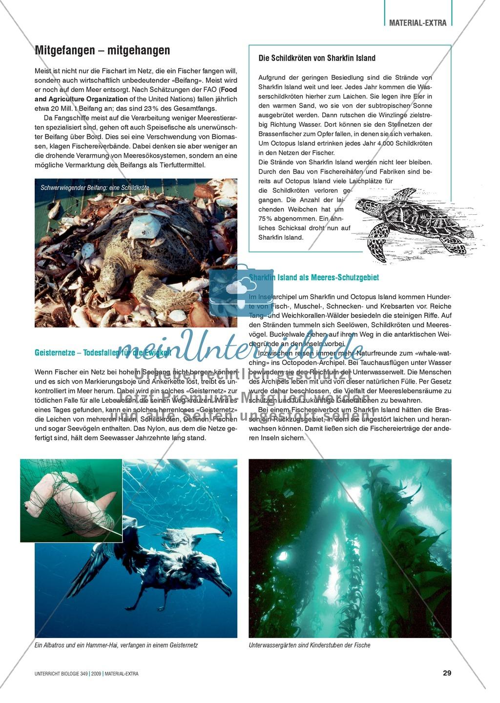 Stoff- und Energieflüsse in einem marinen Ökosystem entdecken und verstehen am Beispiel von Fischfang Preview 4
