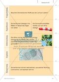 Kartenlegespiel zum naturwissenschaftlichen Forschen über die Eigenschaften verschiedener Lebewesen. Mit ausführlicher Anleitung Preview 10