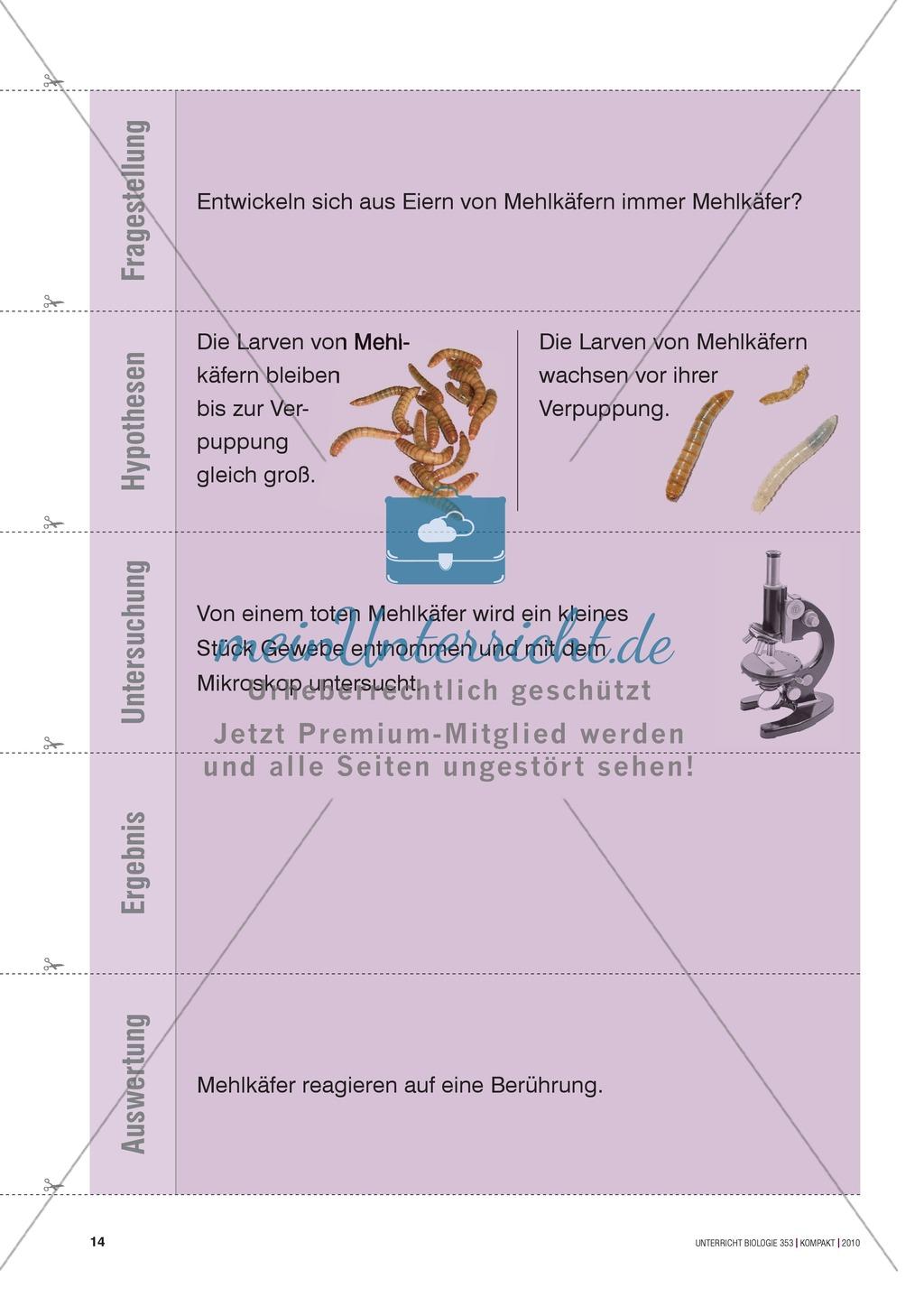 Kartenlegespiel zum naturwissenschaftlichen Forschen über die Eigenschaften verschiedener Lebewesen. Mit ausführlicher Anleitung Preview 12