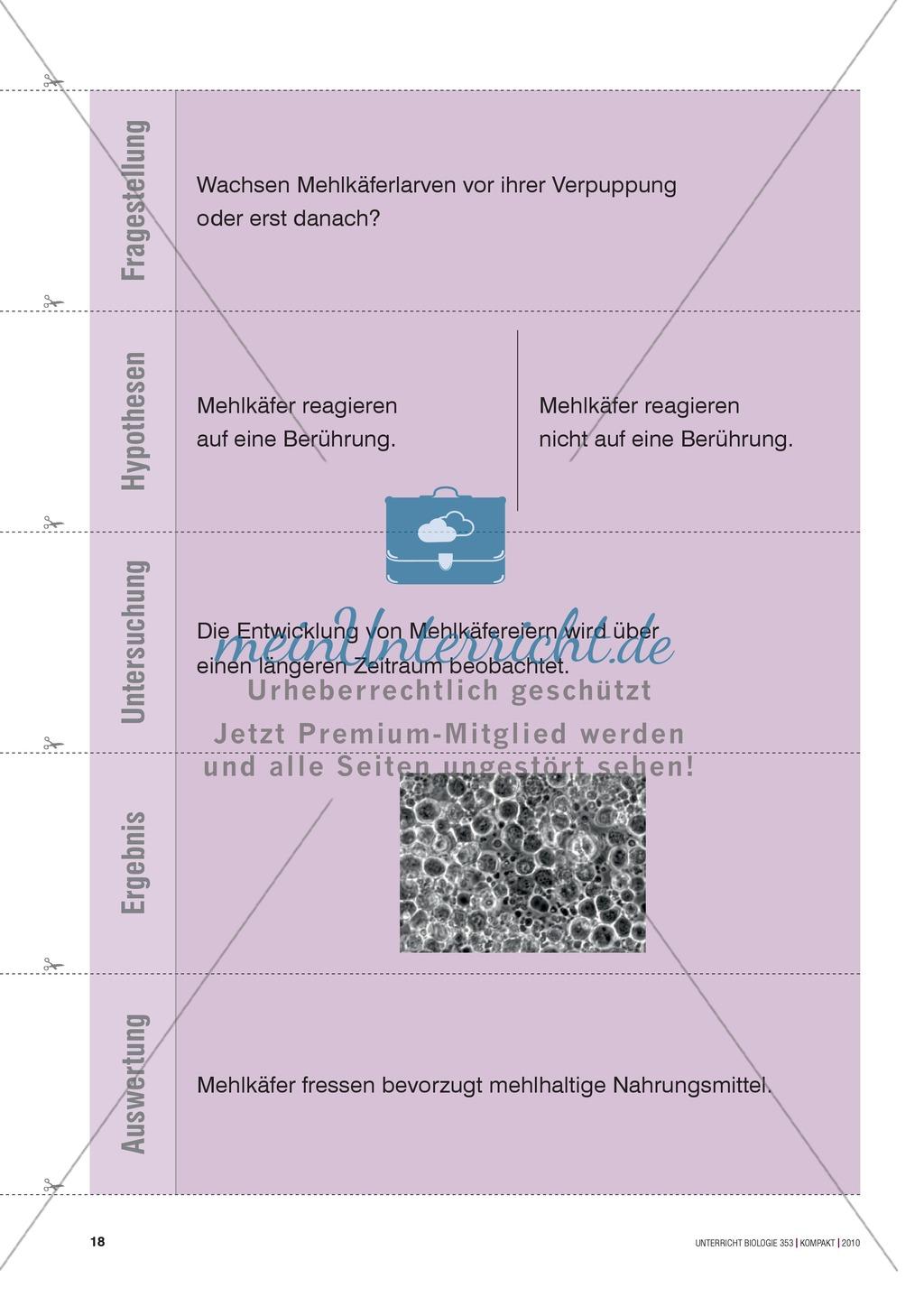 Kartenlegespiel zum naturwissenschaftlichen Forschen über die Eigenschaften verschiedener Lebewesen. Mit ausführlicher Anleitung Preview 16
