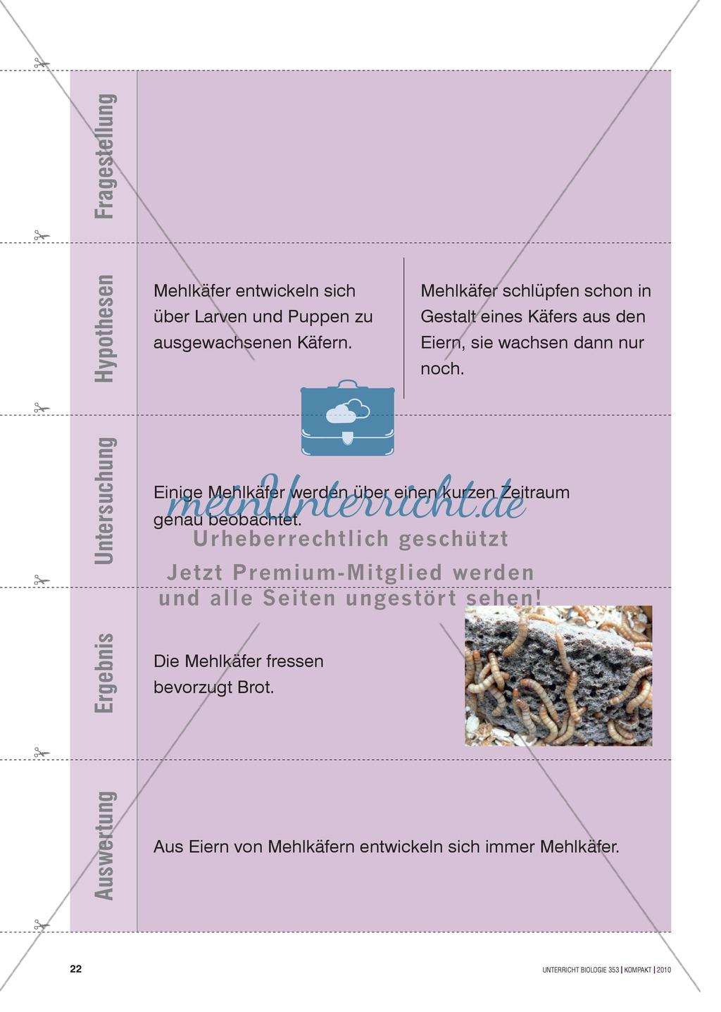 Kartenlegespiel zum naturwissenschaftlichen Forschen über die Eigenschaften verschiedener Lebewesen. Mit ausführlicher Anleitung Preview 20
