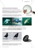 Kartenlegespiel zum naturwissenschaftlichen Forschen über die Eigenschaften verschiedener Lebewesen. Mit ausführlicher Anleitung Preview 2