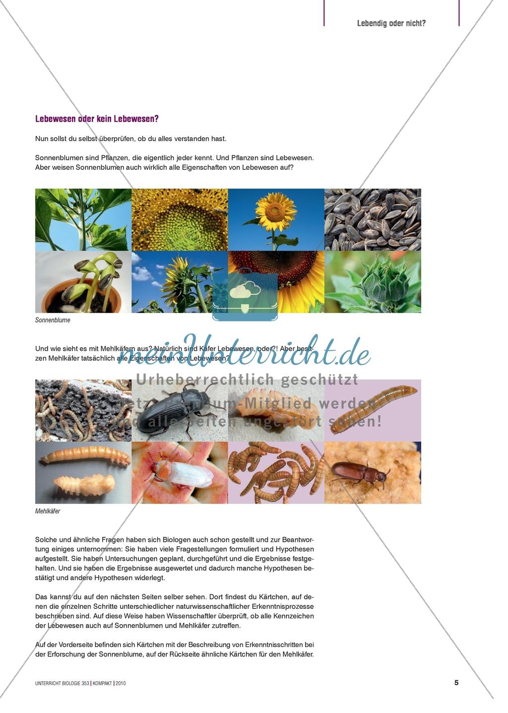 Kartenlegespiel zum naturwissenschaftlichen Forschen über die Eigenschaften verschiedener Lebewesen. Mit ausführlicher Anleitung Preview 3