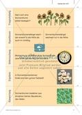 Kartenlegespiel zum naturwissenschaftlichen Forschen über die Eigenschaften verschiedener Lebewesen. Mit ausführlicher Anleitung Preview 6