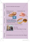 Kartenlegespiel zum naturwissenschaftlichen Forschen über die Eigenschaften verschiedener Lebewesen. Mit ausführlicher Anleitung Preview 7