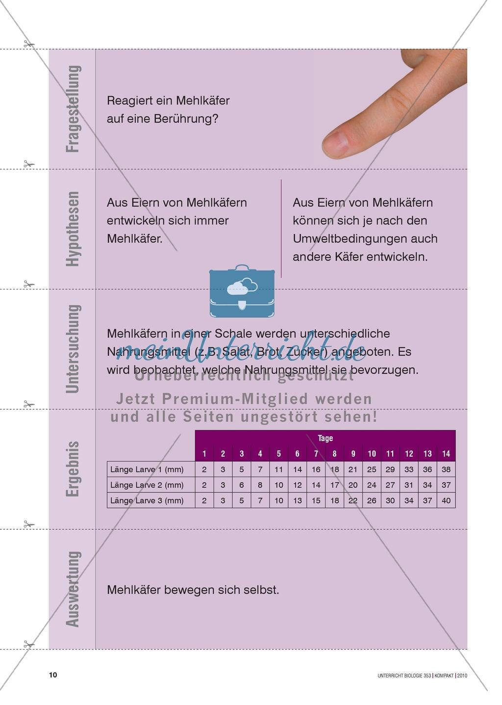Kartenlegespiel zum naturwissenschaftlichen Forschen über die Eigenschaften verschiedener Lebewesen. Mit ausführlicher Anleitung Preview 8