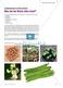 Lebewesen erforschen: Vier durchführbare Forschungsprojekte zu den Eigenschaften der Bohne Thumbnail 0