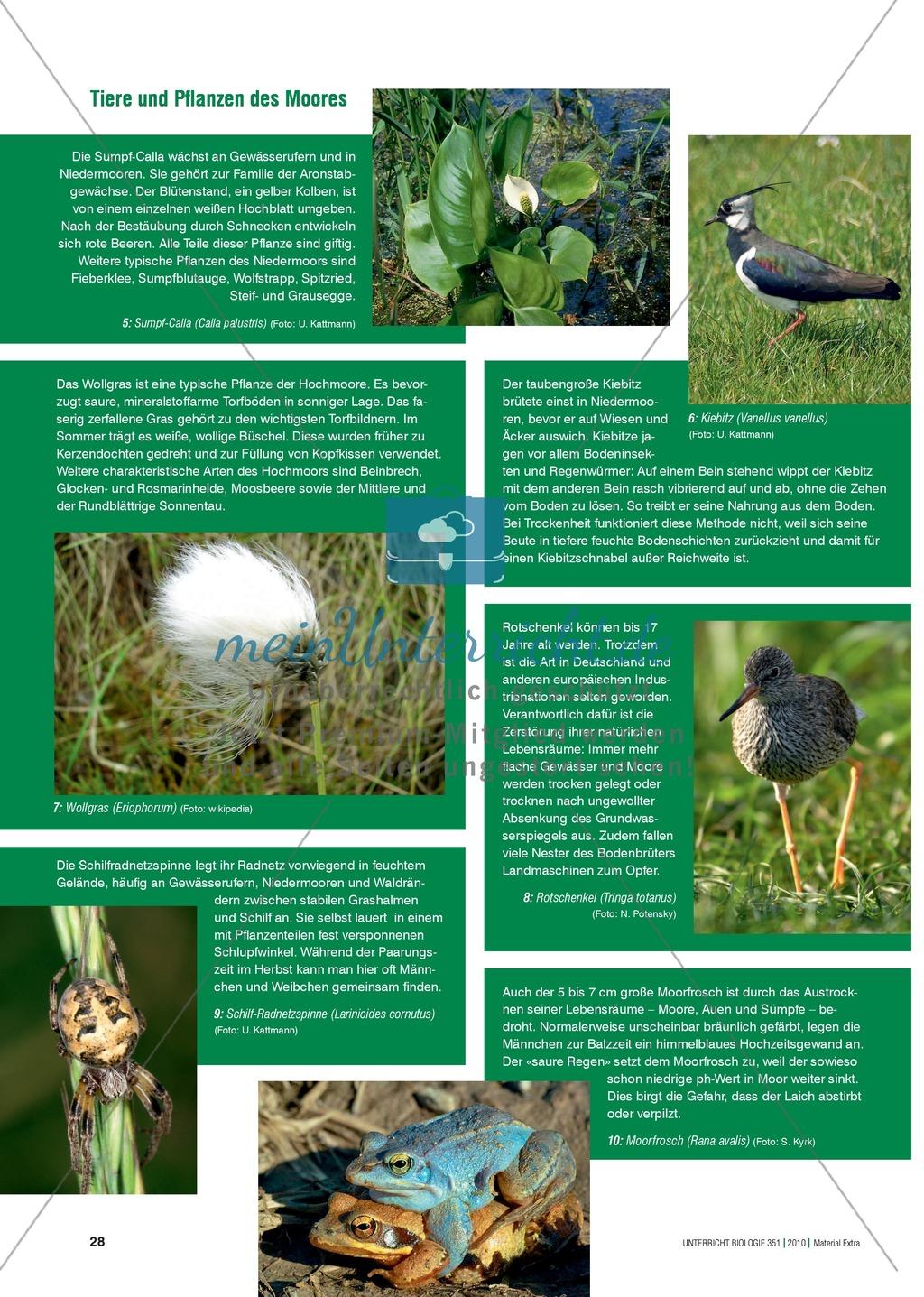 Das Ökosystem Moor: Hydrochemische Bedingungen verstehen und die Folgen einer Entwässerung abschätzen Preview 7