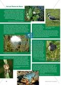 Das Ökosystem Moor: Hydrochemische Bedingungen verstehen und die Folgen einer Entwässerung abschätzen Preview 8