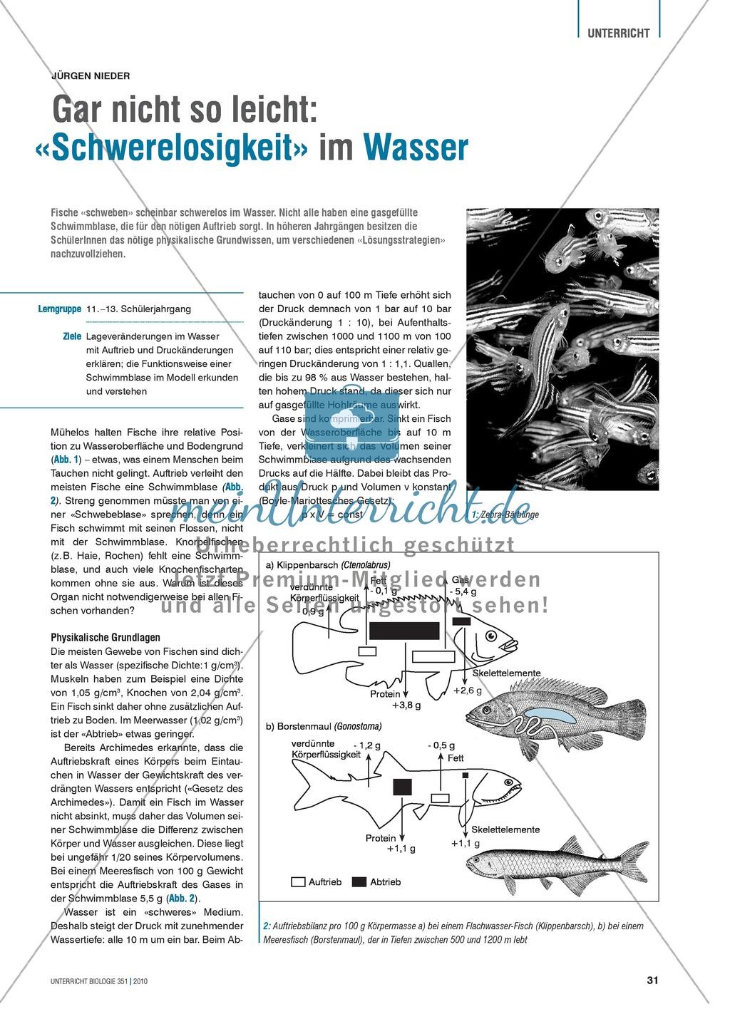 Die Funktionsweise der Schwimmblase im Modell erkunden und verstehen ...