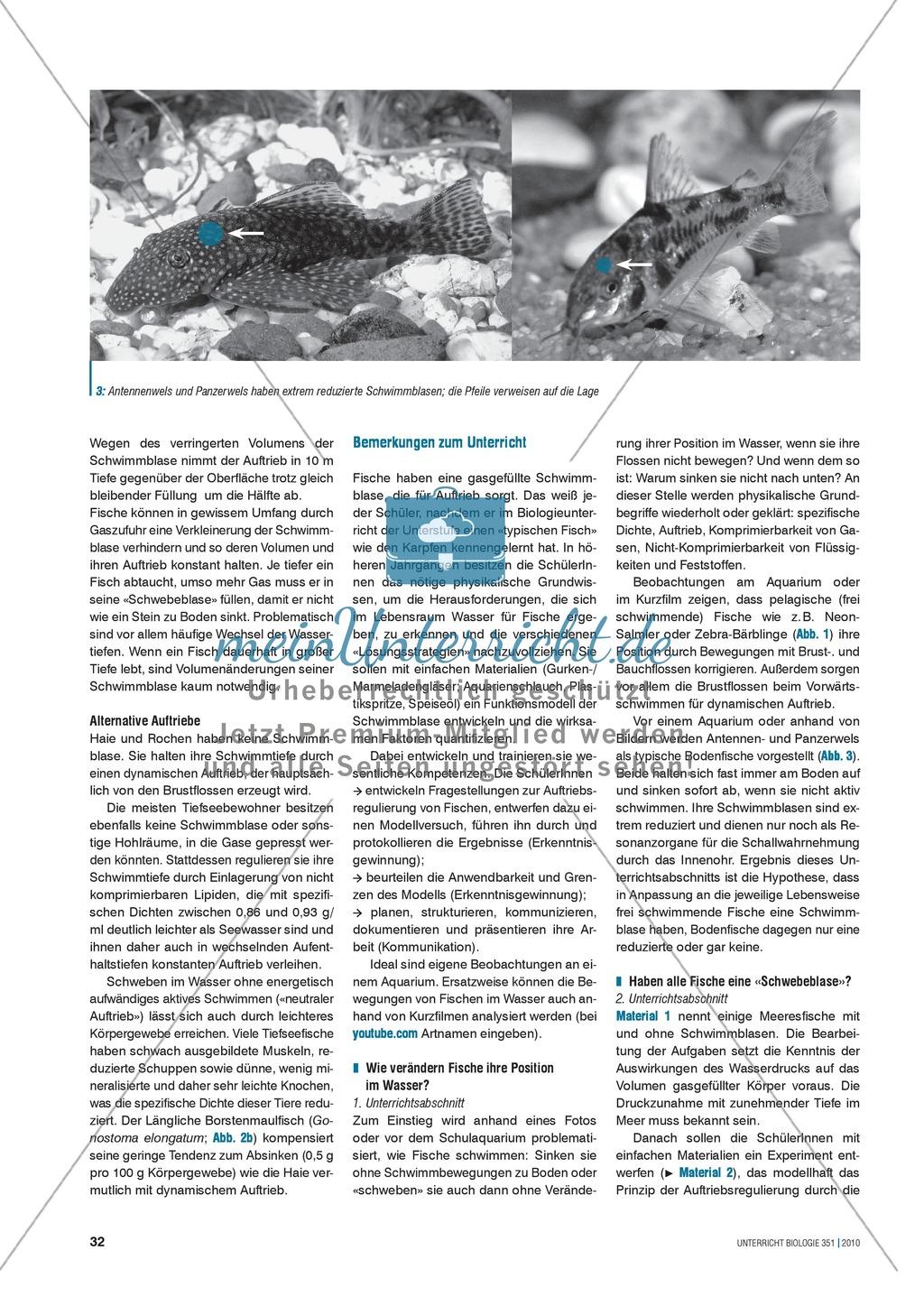 Die Funktionsweise der Schwimmblase im Modell erkunden und verstehen: Preview 1