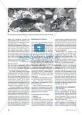 Die Funktionsweise der Schwimmblase im Modell erkunden und verstehen: Preview 2