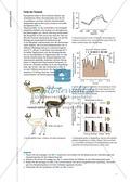 Anpassungsmechanismen der Fauna an die Bedingungen in sehr heißen Gegenden Preview 3